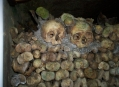 Катакомбы Парижа (Catacombs of Paris) 9